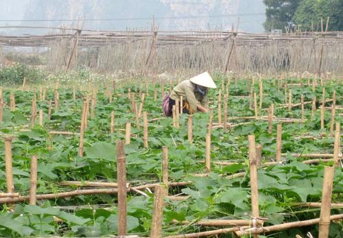 Tân Lạc - điểm sáng quy hoạch xây dựng nông thôn mới