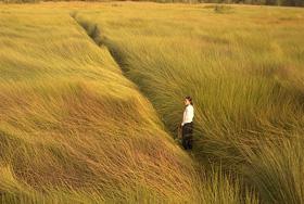 Cánh đồng bất tận sẽ được chiếu ở phần quảng bá điện ảnh Việt Nam đương đại.