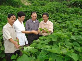 Mô hình trồng Su su lấy ngọn ở xã Ba Khan huyện Mai Châu của ông Hòa đã đem lại hiệu quả kinh tế cao.