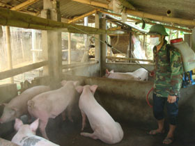 Các hộ dân chăn nuôi ở xã Yên Mông quan tâm phun thuốc khử trung tiêu độc cho vật nuôi.