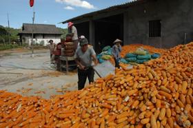 Người dân xã Thung Khe áp dụng tiến bộ KH-KT vào sản xuất góp phần năng xuất cây trồng