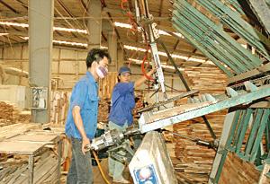 Một dây chuyền sản xuất gỗ xuất khẩu của  Công ty CP Sơn Thủy (Kỳ Sơn).