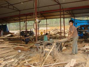 Công ty TNHH một thành viên Hồng Thắng, xóm Chiềng Châu, xã Chiềng Châu (Mai Châu) góp phần thúc đẩy lâm nghiệp phát triển, giải quyết việc làm cho người dân.