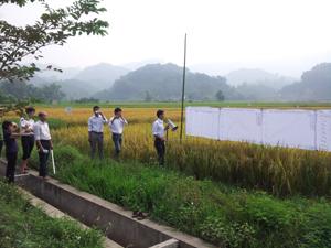 Học viên khóa học trình bày kết quả thí nghiệm so sánh các loại giống lúa.