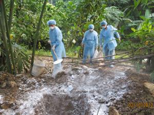 Xử lý chôn tiêu hủy, rắc vôi bột đàn vịt bệnh tại ổ dịch xóm Trung, xã Trung Minh (TP. Hòa Bình).