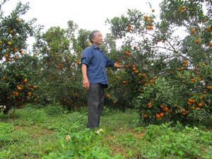 CCB Tạ Đình Đào, khu 5, thị trấn Cao Phong (Cao Phong)  chăm sóc vườn cam của gia đình.