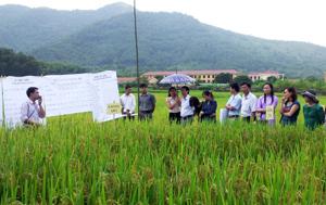 """Được học theo phương pháp FFS, học viên lớp học """"nâng cao năng lực cho cán bộ BVTV"""" năm 2012 trình bày thí nghiệm hiện trường trên ruộng lúa của xã Dân Chủ (TP. Hòa Bình)."""