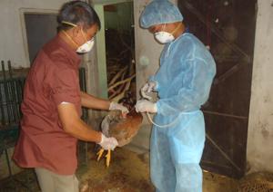 Từ nguồn hỗ trợ của tỉnh, triển khai tiêm vắc xin phòng cúm A/H5N1 tại các xã vùng dịch trọng điểm huyện Lương Sơn.