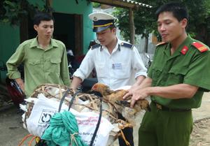 Lực lượng kiểm tra liên ngành tại chốt kiểm dịch huyện Mai Châu kiểm dịch gia cầm vận chuyển ra, vào địa bàn.