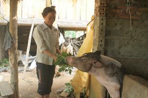 Phụ nữ xóm Lục, xã Yên Nghiệp (Lạc Sơn) phát triển chăn nuôi, tăng thu nhập cho gia đình.