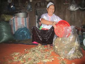 Mế Hà Thị Tiến cho thuốc đã được phơi khô vào túi để bảo quản.
