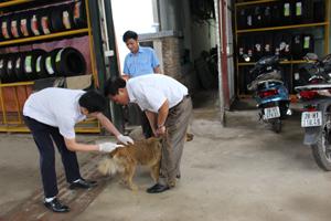 Đợt 2 tiêm phòng vắc xin dại cho đàn chó mèo đang được các địa phương trong tỉnh triển khai.