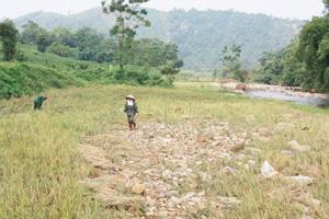 Sỏi, đá tràn vào ruộng sau trận mưa lũ ngày 17 - 18/9 theo người dân, nguyên nhân là do việc san lấp mặt bằng của dự án và khai thác quặng gây nên. (ảnh chụp tại ruộng nhà ông Nguyễn Văn Vi, xóm Bu Chằm, xã Phú Minh, huyện Kỳ Sơn).