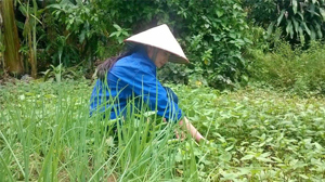 Chị Hoàng Phương Loan, hội viên chi hội tiểu khu 13, thị trấn Lương Sơn tích cực tăng gia sản xuất phát triển kinh tế, tăng thu nhập cho gia đình.
