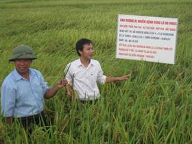 Do sản xuất nông nghiệp ở nhiều nơi còn manh mún, nên việc áp dụng khoa học và công nghệ vào sản xuất gặp khó khăn.