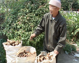Hàng năm, gia đình ông Xa Văn Toàn, xã Cao Sơn (Đà Bắc) thu nhập trên 100 triệu đồng nhờ trồng luồng, ngô và dong riềng.