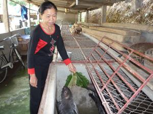 Bà Lường Thị Quý chăm sóc đàn nhím của gia đình.