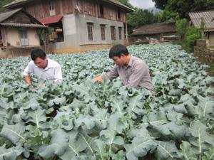 Đoàn kiểm tra thực tế quy trình sản xuất rau ở xóm Cha Long, xã Tòng Đậu.