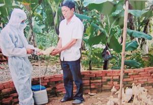 Huyện Kỳ Sơn triển khai tiêm vắc xin phòng cúm gia cầm cho đàn gia cầm trong dân.