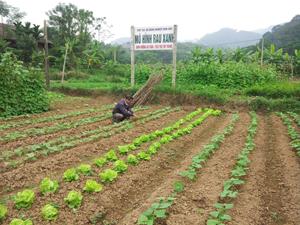 Cán bộ HTX nông nghiệp Dân Chủ thường xuyên kiểm tra chất lượng các loại rau xanh đang được trồng theo quy trình nghiêm ngặt của sản xuất RAT.