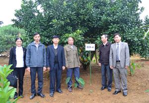 Sau khi xem xét, đánh giá, Hội đồng bình tuyển thống nhất lựa chọn cây bưởi đỏ mang ký hiệu BĐ-4, đề nghị Sở NN&PTNT công nhận là cây đầu dòng giống bưởi đỏ tại huyện Tân Lạc.