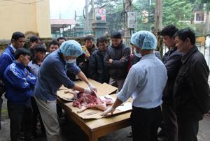 Học viên trực tiếp tham gia mổ khám chẩn đoán bệnh trên lợn.