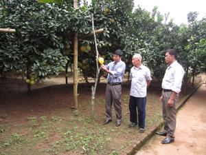 Cán bộ Chi cục BVTV tỉnh và Trạm BVTV huyện Tân Lạc kiểm tra hiệu quả hoạt động của bẫy dẫn dụ ruồi đục quả tại khu vườn trồng bưởi của hộ gia đình ông Trần Văn Hùng (xóm Tân Hương 1, xã Thanh Hối).