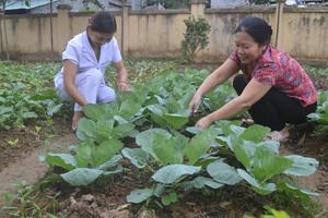Giáo viên trường MN Thái Bình (TPHB) tận dụng diện tích sân vườn trồng rau sạch cung cấp cho bữa ăn của trẻ.