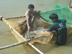 Anh Bùi Văn Thư thực sự là tấm gương vượt khó, dám nghĩ, dám làm để thanh niên noi theo. (Trong ảnh: Anh Bùi Văn Thư (bên trai) bên hồ cá đã đến kỳ thu hoạch.