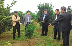 Đoàn công tác Ban chỉ đạo T.Ư chương trình mục tiêu quốc gia về xây dựng NTM làm việc với lãnh đạo UBND tỉnh