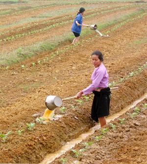 Nông dân xã Yên Nghiệp (Lạc Sơn) chống hạn cho cây trồng họ bầu, bí.