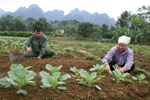 Huyện Kim Bôi triển khai đồng bộ các giải pháp giảm nghèo