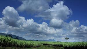 Khoảnh khắc mây, trời và cánh đồng mía xanh ngút ngàn.