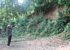 Theo người dân xóm Ngòi, xã Ngòi Hoa (Tân Lạc), khu vực này thường xuyên xảy ra sạt lở đất, đá.
