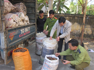 Nhiều hành vi vận chuyển, kinh doanh hàng hoá không đảm bảo chất lượng an toàn thực phẩm đã được các Đội QLTT huyện, thành phố phát hiện, xử lý.