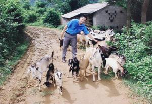Từ phát triển đàn dê mỗi năm anh Tiến có thể  thu lãi từ 130 – 140 triệu đồng.
