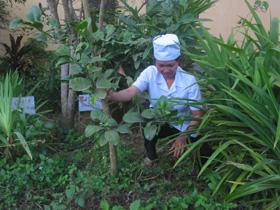 Vườn cây thuốc nam tại Trạm y tế xã Hưng Thi được sử dụng hợp lý trong điều trị bệnh thông thường