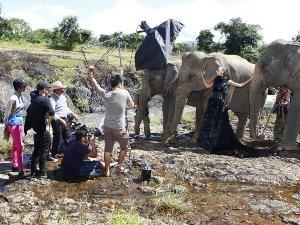 Bối cảnh buổi chụp hình với voi (Nguồn ảnh: BTC)