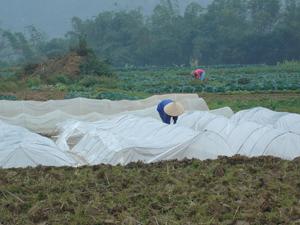 Tranh thủ thời tiết thuận lợi, bà con xã Yên Mông (TPHB) gieo mạ chuẩn bị cấy vụ chiêm xuân.