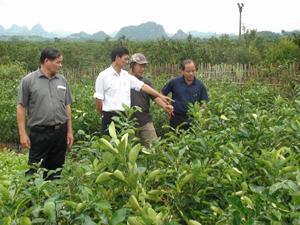 Hội viên Hội CCB huyện Cao Phong thăm, trao đổi kinh nghiệm phát triển kinh tế tại mô hình vườn ươm cam giống mới của hội viên CCB Nguyễn Văn Toàn, khu 3, TT Cao Phong. Ảnh: P.V