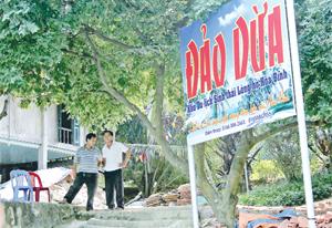 Đảo Dừa - mô hình du lịch sinh thái mới trên vùng hồ Hòa Bình.