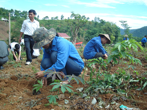 Thực hiện phong trào tình nguyện vì cuộc sống cộng đồng, ĐV-TN huyện Cao Phong tham gia trồng cây phủ xanh đất trống, đồi núi trọc tại xã Yên Thượng.