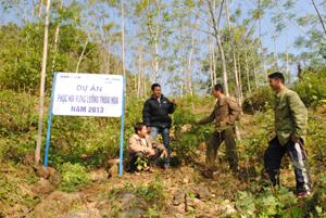 Mô hình phục hồi rừng luồng tại xóm Dưng, xã Hiền Lương (Đà Bắc) mang lại hiệu quả cho người dân.