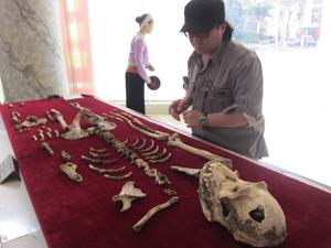 Với điều kiện bảo quản còn nhiều khó khăn, thiếu thốn, sau 16 năm, bộ di cốt đười ươi đặc biệt quý mà Bảo tàng tỉnh lưu giữ đang có dấu hiệu xuống cấp rõ rệt.