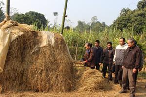 Kiểm tra việc chuẩn bị thức ăn cho gia súc của hộ chăn nuôi xã Yên Nghiệp (Lạc Sơn).