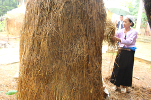 Xã Ân Nghĩa (Lạc Sơn) triển khai tiêm vắc xin LMLM cho đàn trâu, bò đạt tỷ lệ trên 85% tổng đàn.
