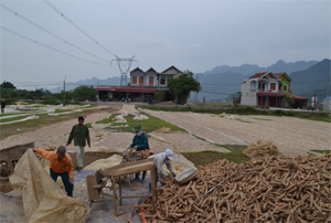 Nông dân xã Yên Trị tiếp cận với phương thức sản xuất nông sản hàng hoá. (Ảnh: Người dân sơ chế sắn làm hàng hoá)