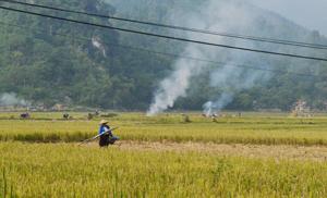 Nông dân xã Yên Mông (TPHB) đốt rơm rạ sau khi thu hoạch vụ lúa mùa.