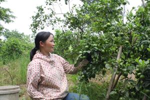 Nông dân xã Hòa Sơn (Lương Sơn) tích cực chuyển đổi cơ cấu cây trồng, áp dụng tiến bộ KH-KT trong sản xuất mang lại hiệu quả kinh tế cao.