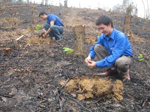 Thực hiện công tác bảo vệ và phát triển rừng, bình quân mỗi năm toàn tỉnh đã trồng mới khoảng 8.000 ha rừng, duy trì tốt độ che phủ rừng trên địa bàn tỉnh (ảnh: trồng rừng mới trên địa bàn xã Trung Minh, TPHB).